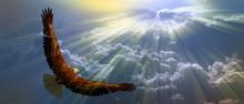 """Постер, картина, фотообои """"Eagle in the sky"""""""