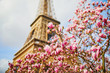 Beautiful pink magnolia in full bloom near the Eiffel tower in Paris
