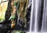 Oiseau et cascade