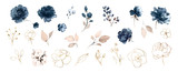 Set watercolor design elements of roses collection garden navy blue flowers, leaves, gold branches, Botanic  illustration isolated on white background. - 254160908