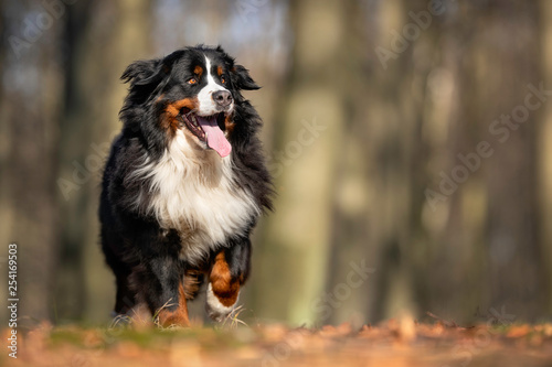 Portrait of a dog - 254169503