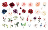 Set watercolor elements of roses collection garden red, burgundy flowers, leaves, branches, Botanic  illustration isolated on white background.   - 254169973