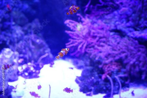 obraz PCV 水族館の魚やペンギン