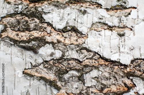 white birch bark. wood texture. background - 254193547