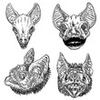 Set of bat heads or faces,  witchcraft magic, occult attributes decorative elements of gothic vampires. Set for Halloween.