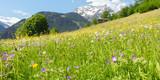 Fototapeta Natura - Panorama einer Bergblumenwiese im Frühling © by paul