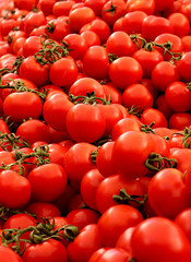 One handed red tomatoes