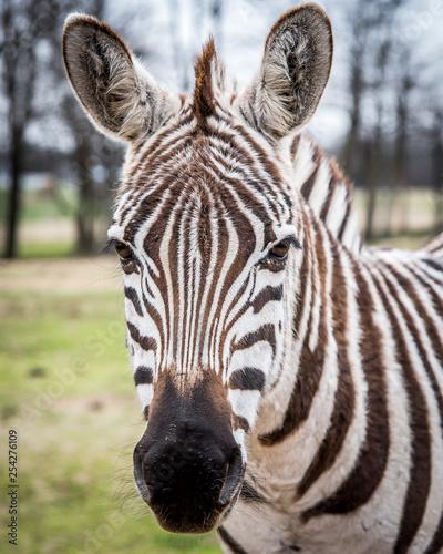 Zebra stripes and design patterns - 254276109