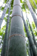 bamboo © notglossymatt