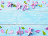 Pink orchid on blue wood background.