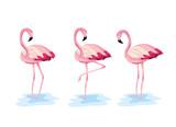 set flamingos tropical wild animal