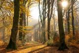 Fototapeta Fototapeta las, drzewa - La forêt de Crécy en Automne © Alonbou