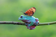 Dumpy frog best friend with butterfly, butterfly landing on body dumpy frog