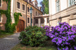 Leinwandbild Motiv Picturesque Kolowrat Garden in Prague with Blooming Rhododendrons