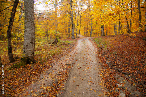 autumn beautiful road in forest