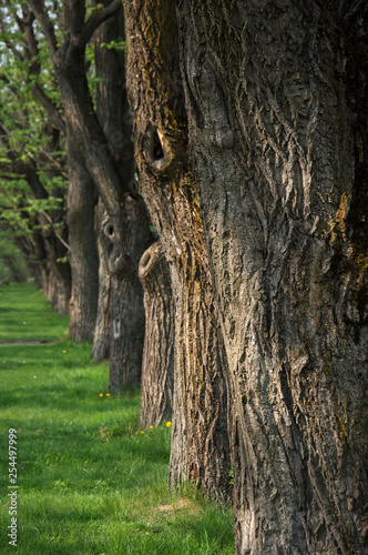 tree trunks in the park - 254497999