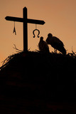 storks in the nest at sunset