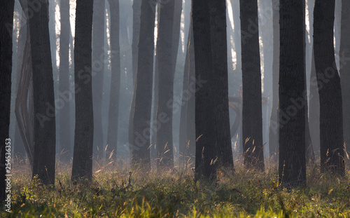Big trunks and high grass in forest