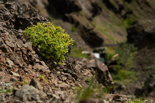 Lonely plant on mountain side