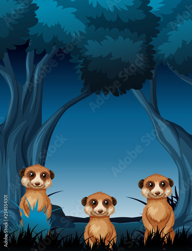 Meercat at night scene - 254554301