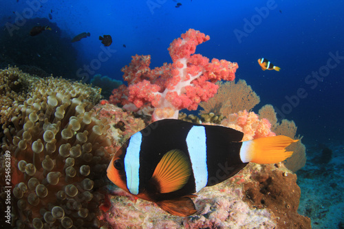 obraz PCV Underwater coral reef and fish