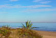 Agave plants at beach edge. Sandy beach of Mediterranean Sea with plants and gently rolling waves.