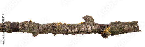 dry pear tree branch with cracked bark. isolated on white background