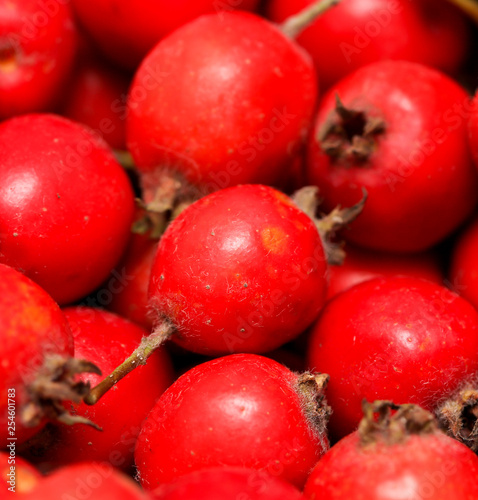 Red hawthorn berries as background - 254601783