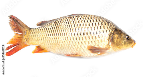 Leinwanddruck Bild Fish carp isolated on white background