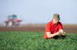 Young farmer examing planted wheat fields