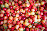 red cherry background. Red ripe delicious cherries