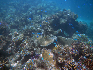 underwater, coral, Great, barrier, reef, Cairns, Australia