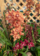 Multi-Colored Orchid Display
