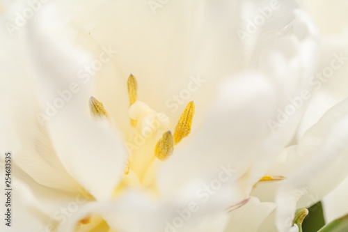 white flower as background - 254683535
