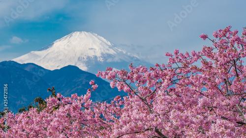 obraz PCV Sakura With Fuji Mountain View Background