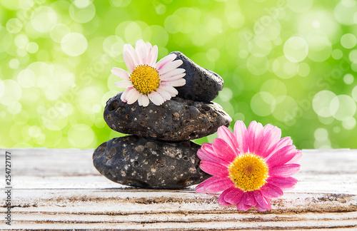 piedras y flores  sobre un fondo verde
