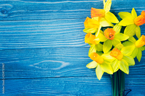 Daffodil flowers on blue wooden background