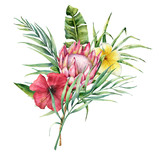 Watercolor tropical flowers and palm leaves bouquet. Hand painted protea, hibiscus and plumeria isolated on white background. Nature botanical illustration for design, print. Realistic delicate plant. - 254735149