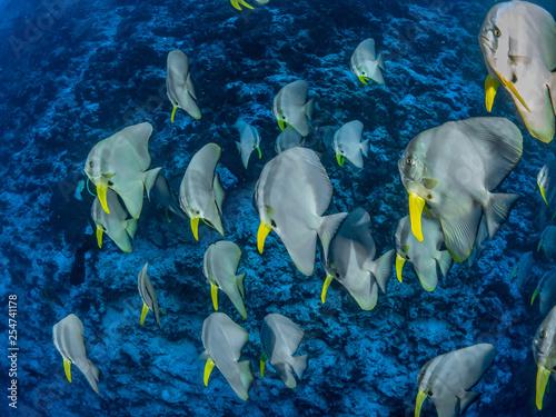 obraz PCV Diving Christmas Island