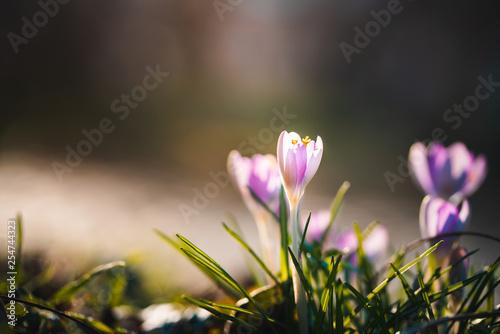 Blume im Sonnenlicht