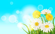 Spring flower daisy juicy, chamomiles yellow dandelions green grass background Template for banners, web, flyer. Vector illustration isolated.