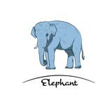 Sketch of elephant.Hand made. Blue tone.