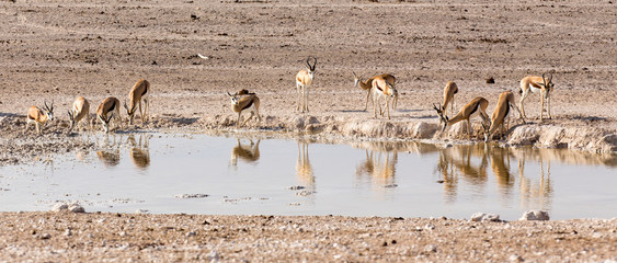Animals arriving at water hole in desert