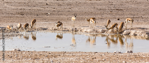 Animals arriving at water hole in desert © mauriziobiso