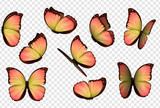 Butterfly vector. Colorful isolated butterflies. Insects with bright coloring on transparent background