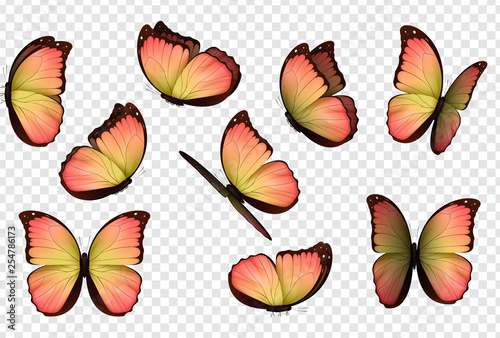 Butterfly vector. Colorful isolated butterflies. Insects with bright coloring on transparent background - 254786173