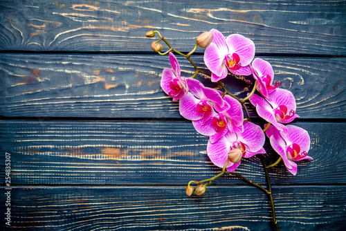 A branch of purple orchids on a brown wooden background  - 254835307