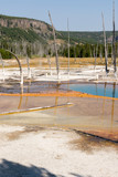 Geyser in Black Sand Basin in Yellowstone National Park in Wyoming