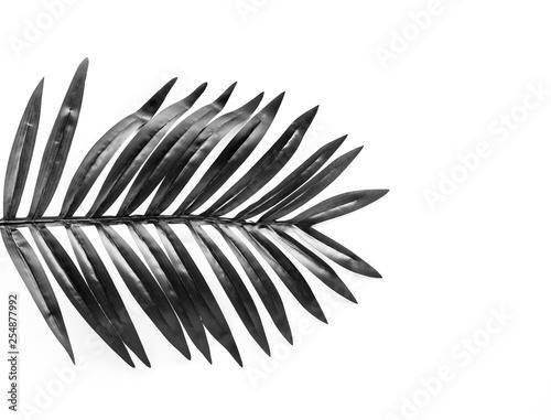 fototapeta na ścianę Black and white tropical leaves foliage plant close up with white copy space background