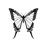 Hand drawn yellow swallowtail butterfly - 254891381